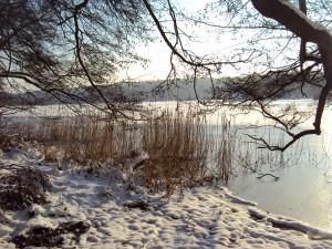 wolletz- schneeeisbaum